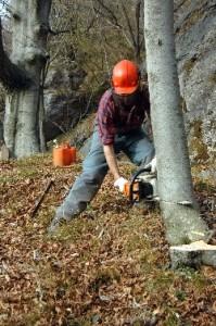 biomasse-da-sfruttare-nelle-centrali