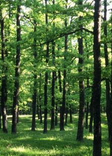 bosco-montepiano