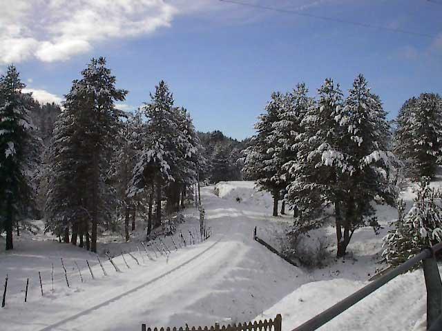 sila-piccola-neve