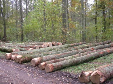 biomassa-forestale