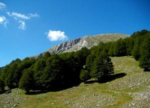 parco-nazionale-del-pollino-boschi-svenduti