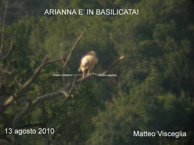 Capovaccaio Arianna - Foro M. Visceglia
