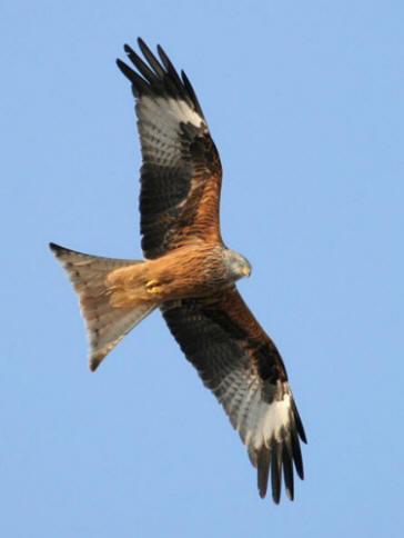 Caccia regione puglia dichiara guerra agli animali - Uccelli che sbattono contro le finestre ...