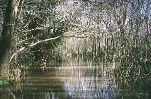 bosco-pantano-di-policoro-foto-a.colucci