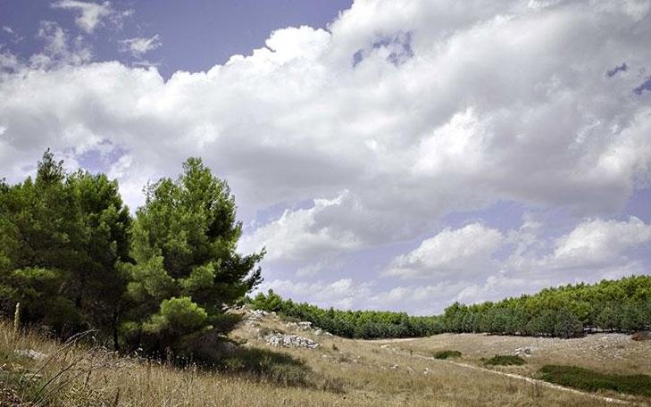 bosco-coleti-minervino
